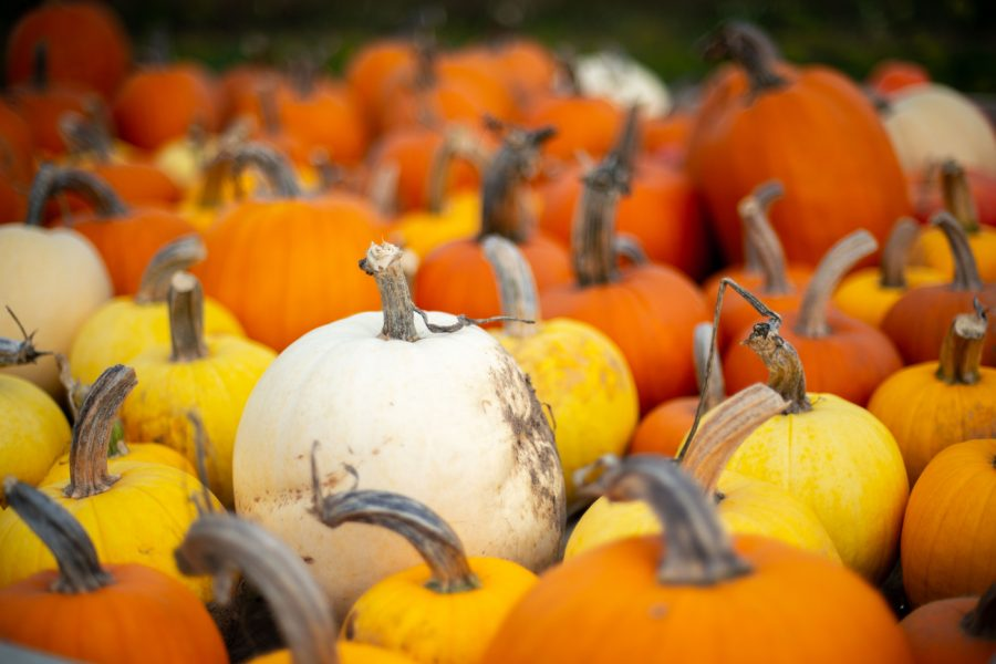 Five things to do during Spooky Season