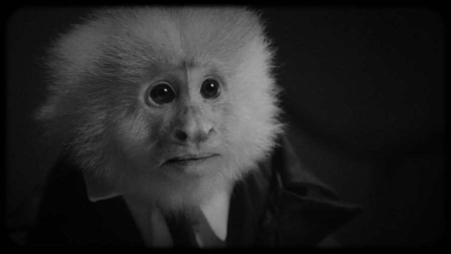 The+primate+who+performs+as+superstar+crooner+Jack+Cruz%2C+as+seen+in+David+Lynch%27s+short+Netflix+film%2C+%22What+Did+Jack+Do%3F%22+%28Netflix%29